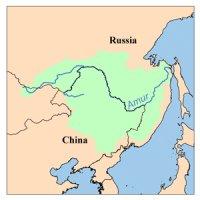 Amur bost koe Asia